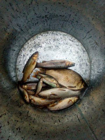 Немного рыб