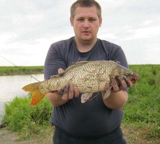 река Чулым сазан 2,6 кг