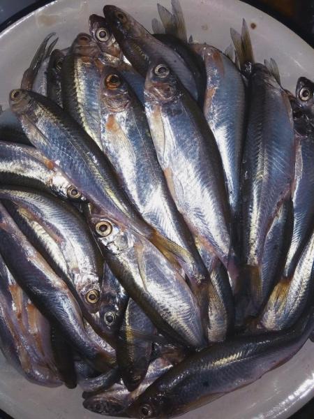 Прикрепленное изображение: рыба.jpg