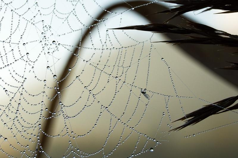 Прикрепленное изображение: паутинка.jpg