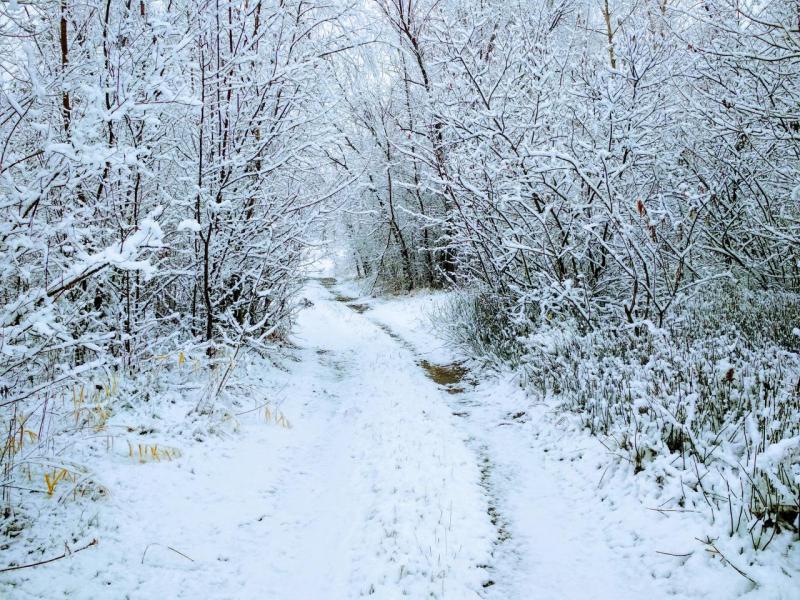 утренний снег.jpg