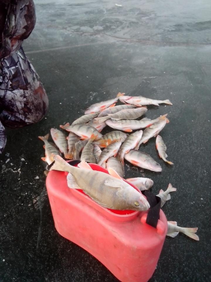 рыбхоз прогноз клева в красноярске