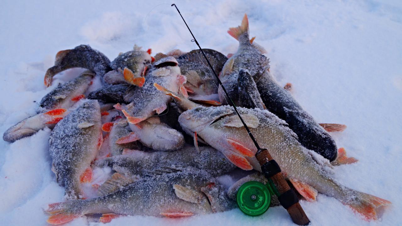 рыбалка на балансир окунь 2016 видео