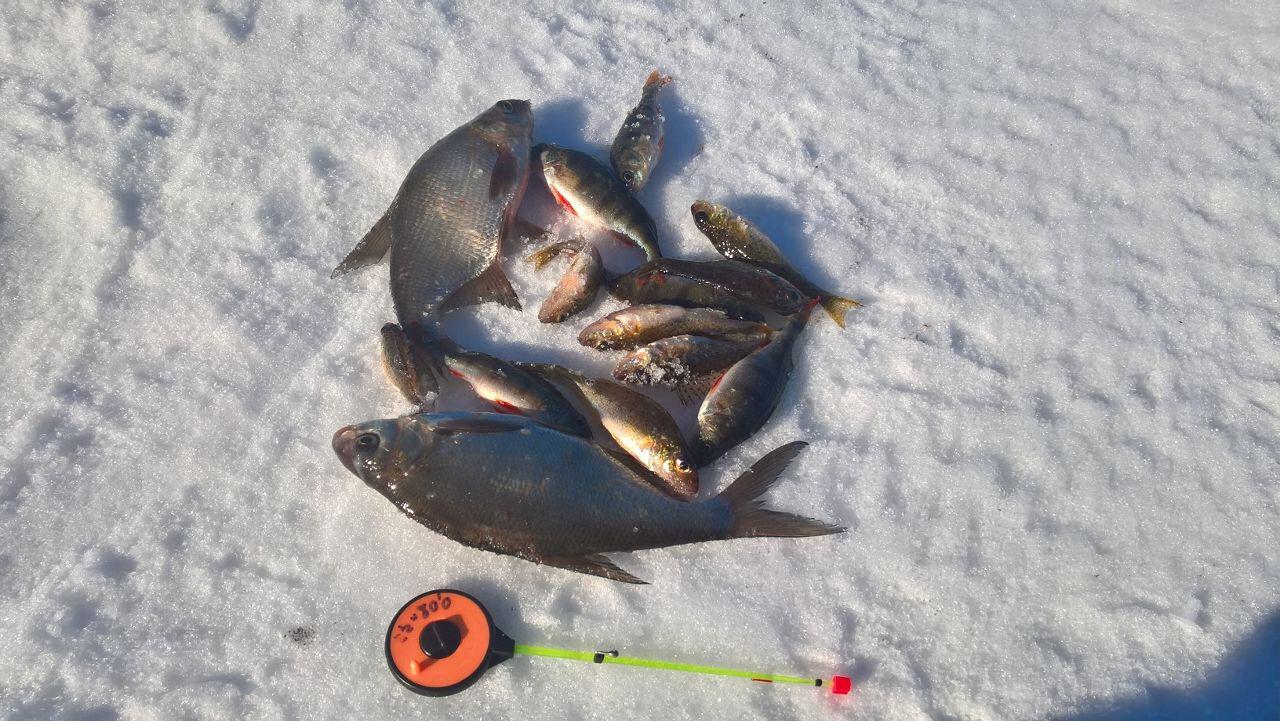 чемпионат россии по рыбной ловле на мормышку