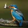 Таёжная рыбалка - последнее сообщение от Rassokhindasky