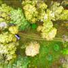 Осенний лес Алтая глазами дрона.